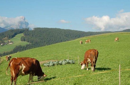 Cone da Val - San Vigilio di Marebbe / South Tyrol 21
