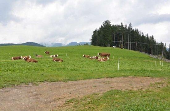 Cone da Val - San Vigilio di Marebbe / South Tyrol 22