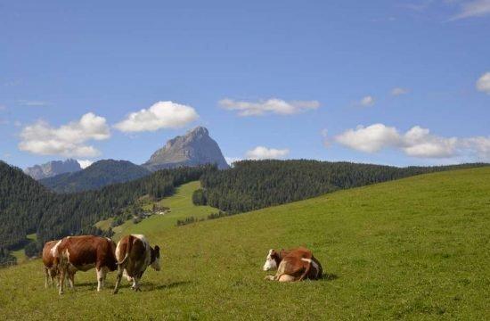 Cone da Val - San Vigilio di Marebbe / South Tyrol 32